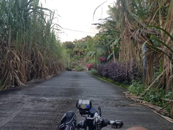 Balade à travers les champs de canne, ile de la Réunion vélo-couché Atmosphère Péi