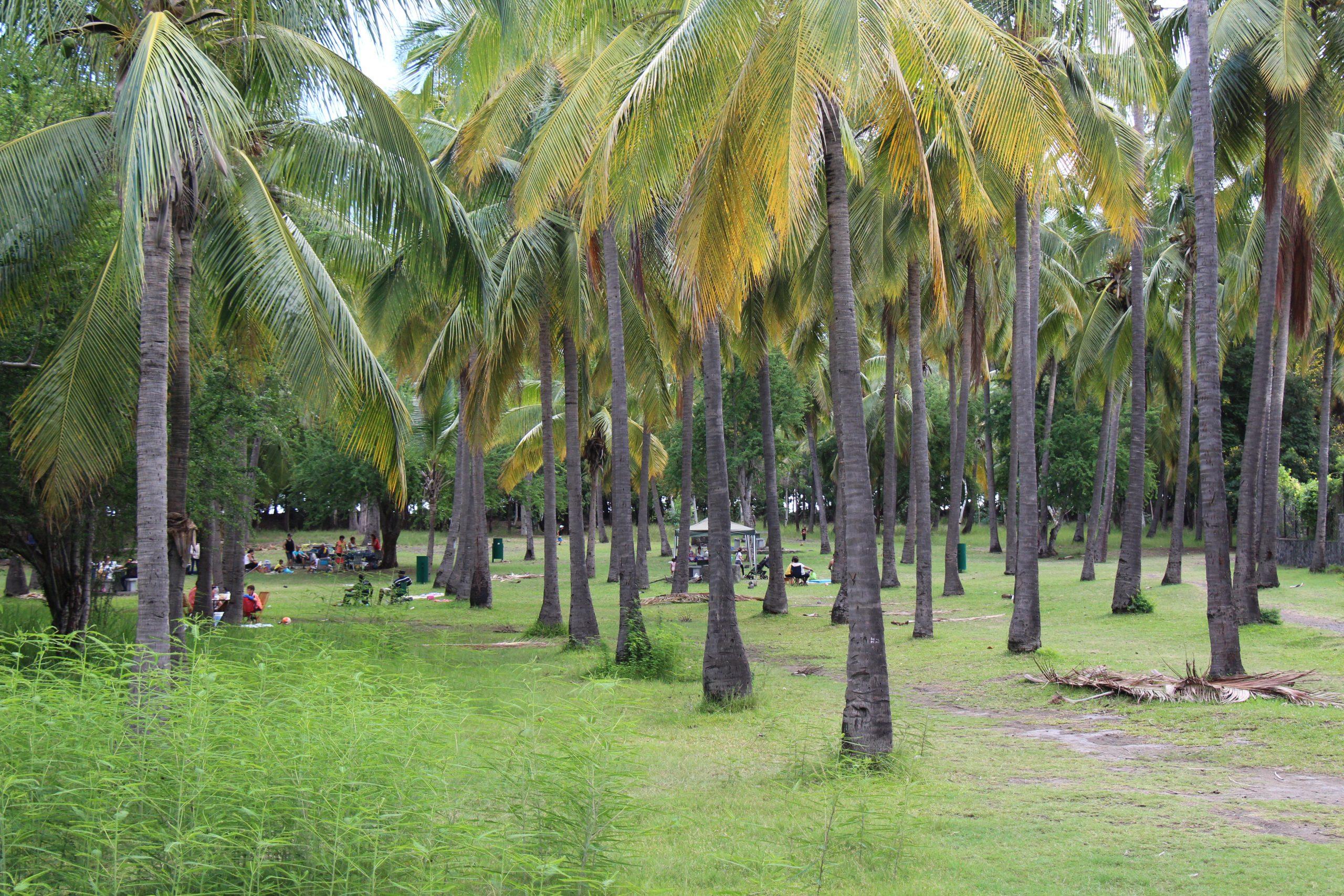 Saint-Paul parc des palmiers balade en vélo-couché ile de la Réunion