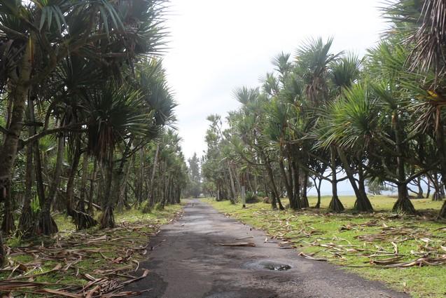 Ile de la Réunion randonnée vélo-couché Bras Panon
